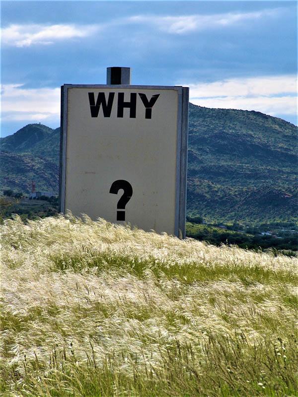 Why skilt midt i naturen benyttes til vores blog om miljøinitiativer på www.curlsforyou.dk
